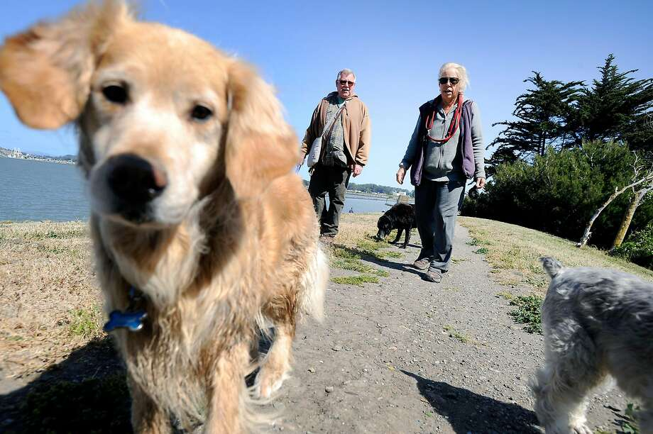 Dogs are allowed to run off leash at Point Isabel Regional Shoreline near Richmond, one of the most popular parks for dogs in California Photo: East Bay Parks / Special To The Chronicle
