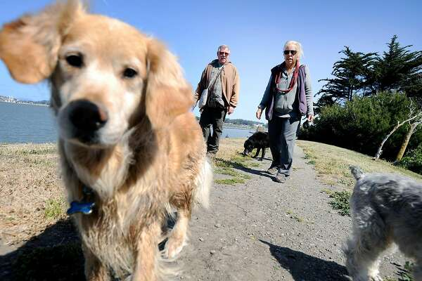 Dogs are allowed to run off leash at Point Isabel Regional Shoreline near Richmond, one of the most popular parks for dogs in California