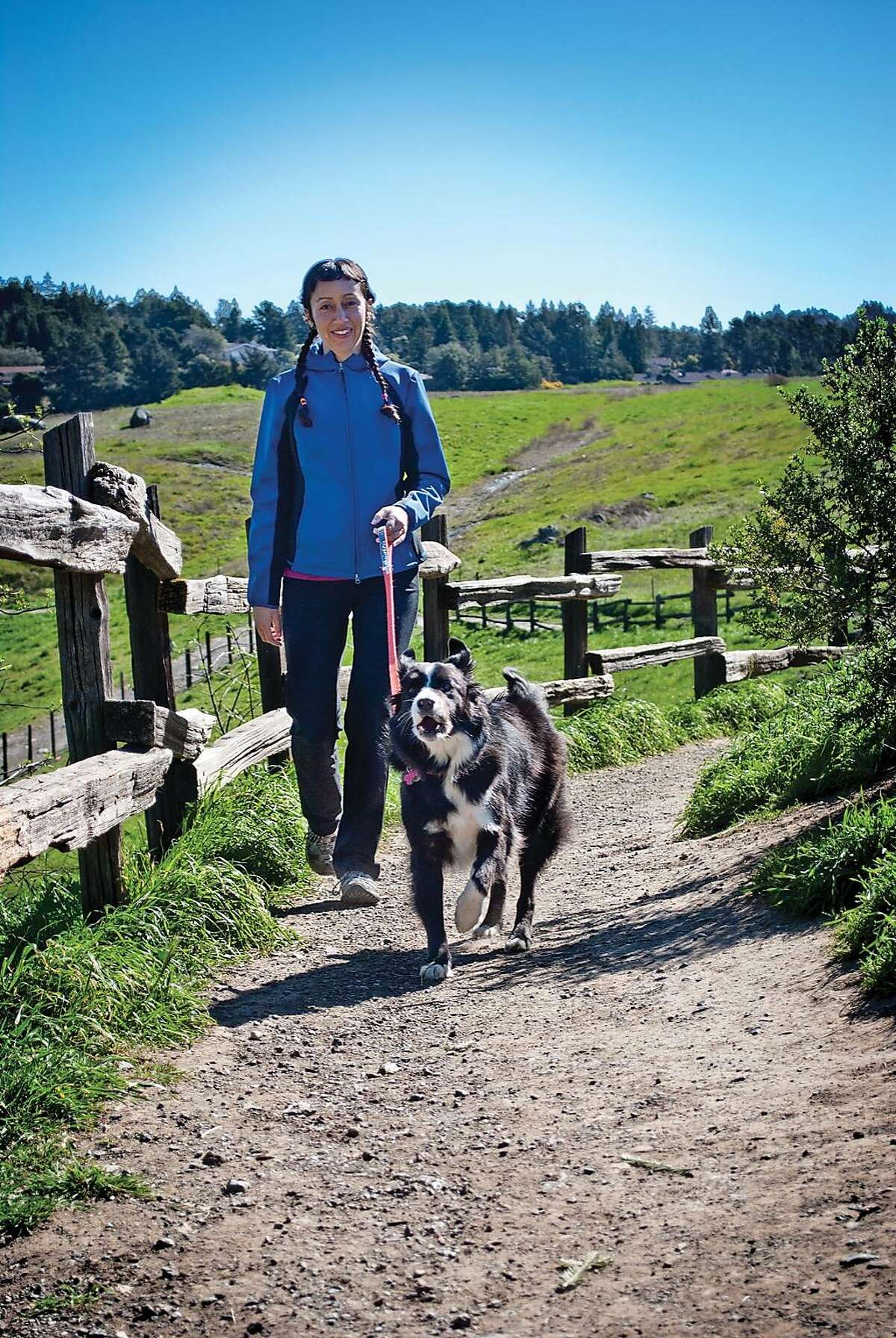 Leashed dogs are permitted in virtually all of the 65 parks in the East Bay Regional Park District and throughout the park roads on land managed by the Marin Municipal Water District, but sharply restricted in most other parks and open space throughout the Bay Area
