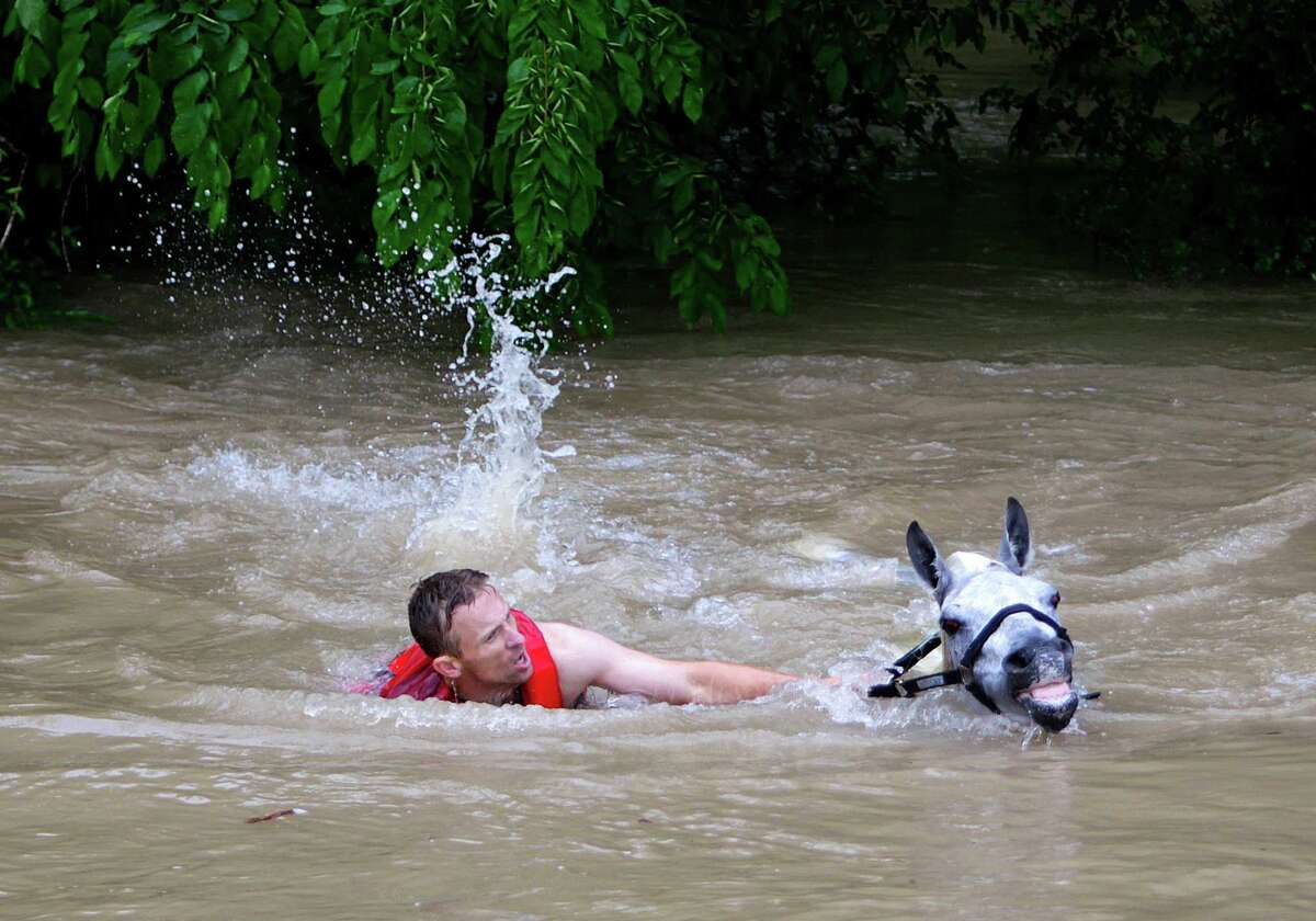 Locals work to rescue up to 70 horses along Cypresswood Drive near Humble along Cypress Creek, Monday, April 18, 2016, in Houston.