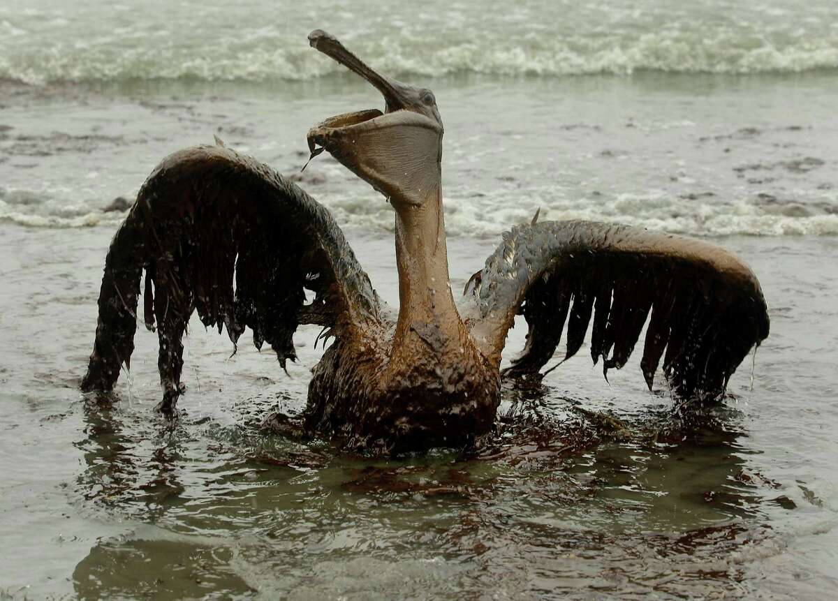 The Gulf oil spill in 2010 cost 11 men their lives and wreaked havoc on wildlife.