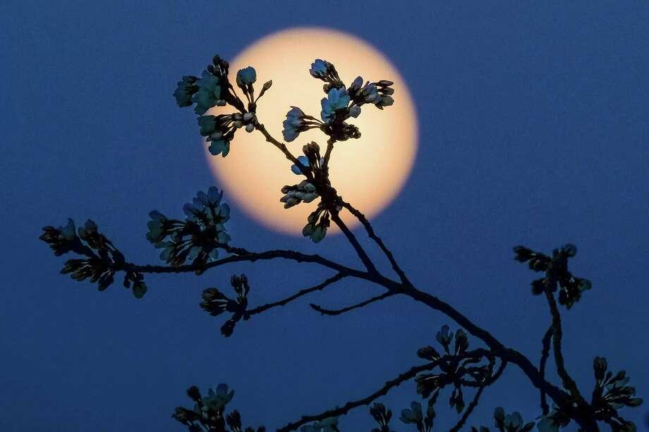 March 1Full Moon Night HikeBig Thicket Visitor Center6102 FM 430, Kountze6:15 p.m. Photo: J. David Ake, STF / AP