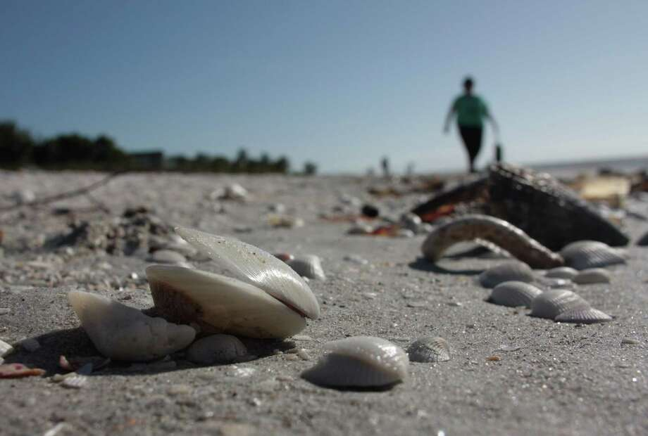Sanibel Island, Florida, is known for its plentiful shells, which visitors can learn about during the Bailey-Matthews National Shell Museum's guided beach walks. Photo: Selina Kok /For The Washington Post / For The Washington Post