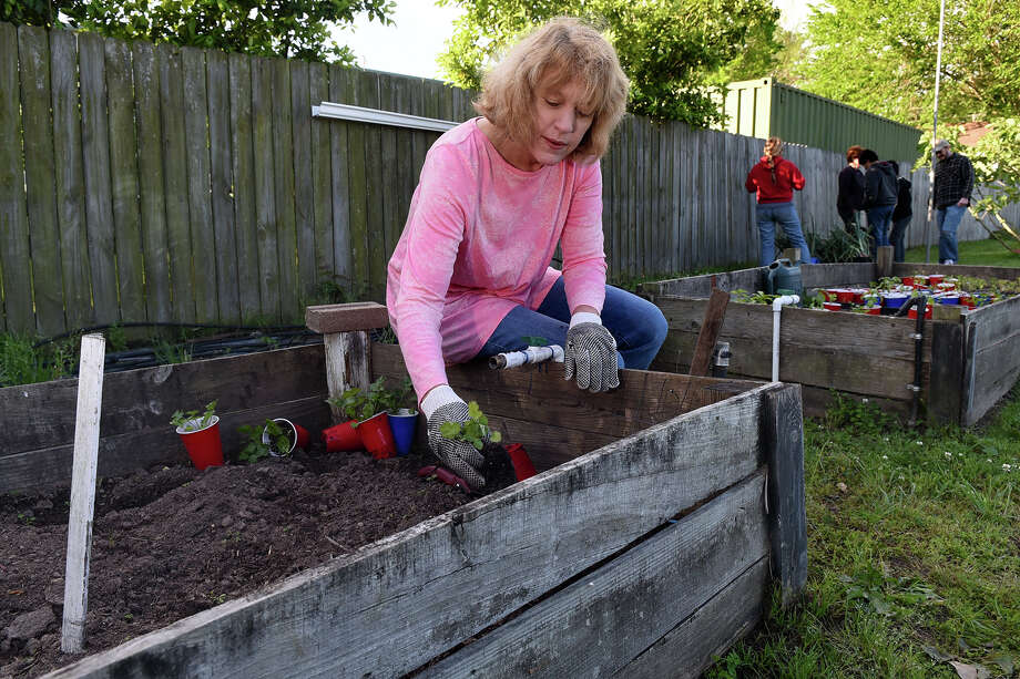 Charities reap harvests of community gardens - Houston Chronicle