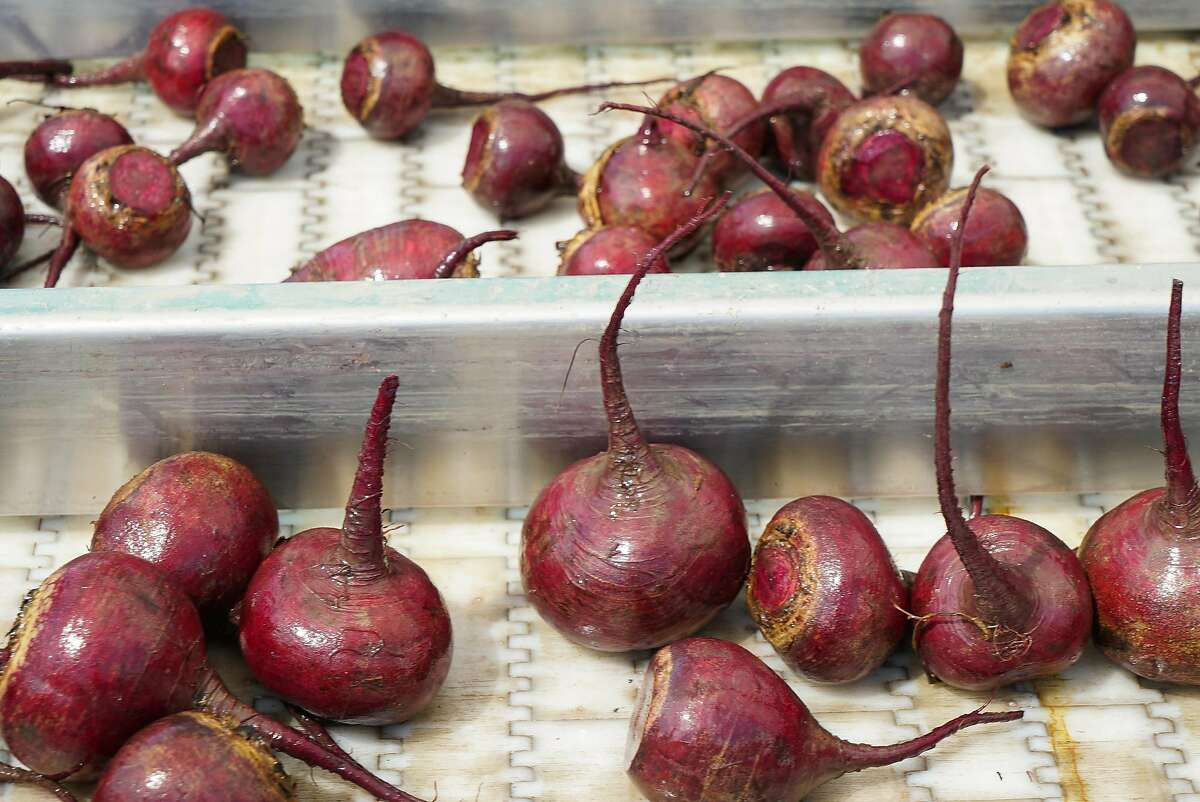 A mix of regular and imperfect beets are sorted at Coke Farms in San Juan Bautista to sell to food companies that use imperfect fruits and vegetables that would otherwise go to waste.