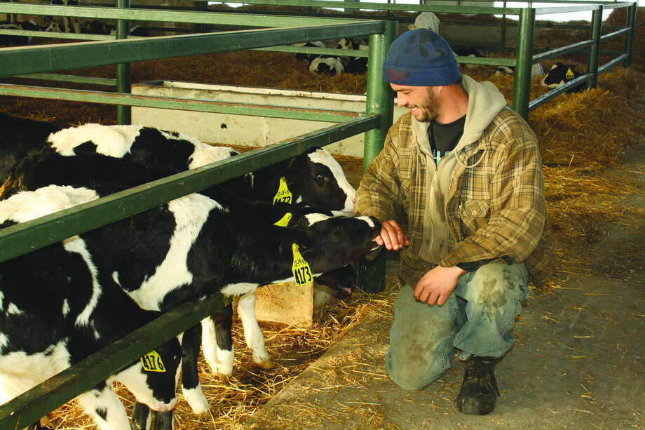 Jurgen TeVoortwis checks out young calves while making his daily rounds at a local dairy farm. (Tribune file photo)