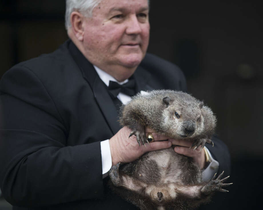 """Inner Circle President Bill Deeley shows Punxsutawney Phil to tourists a day before Groundhog Day in Punxsutawney, Pa., on Monday, Feb. 1, 2016. Members of the Inner Circle planned to reveal their forecast at sunrise Tuesday. A German legend says that if a furry rodent sees his shadow on Feb. 2, winter will last an additional six weeks. If not, spring comes early. In reality, Phil's """"prediction"""" is decided ahead of time by the group. (Mark Pynes/PennLive.com via AP) Photo: Mark Pynes"""