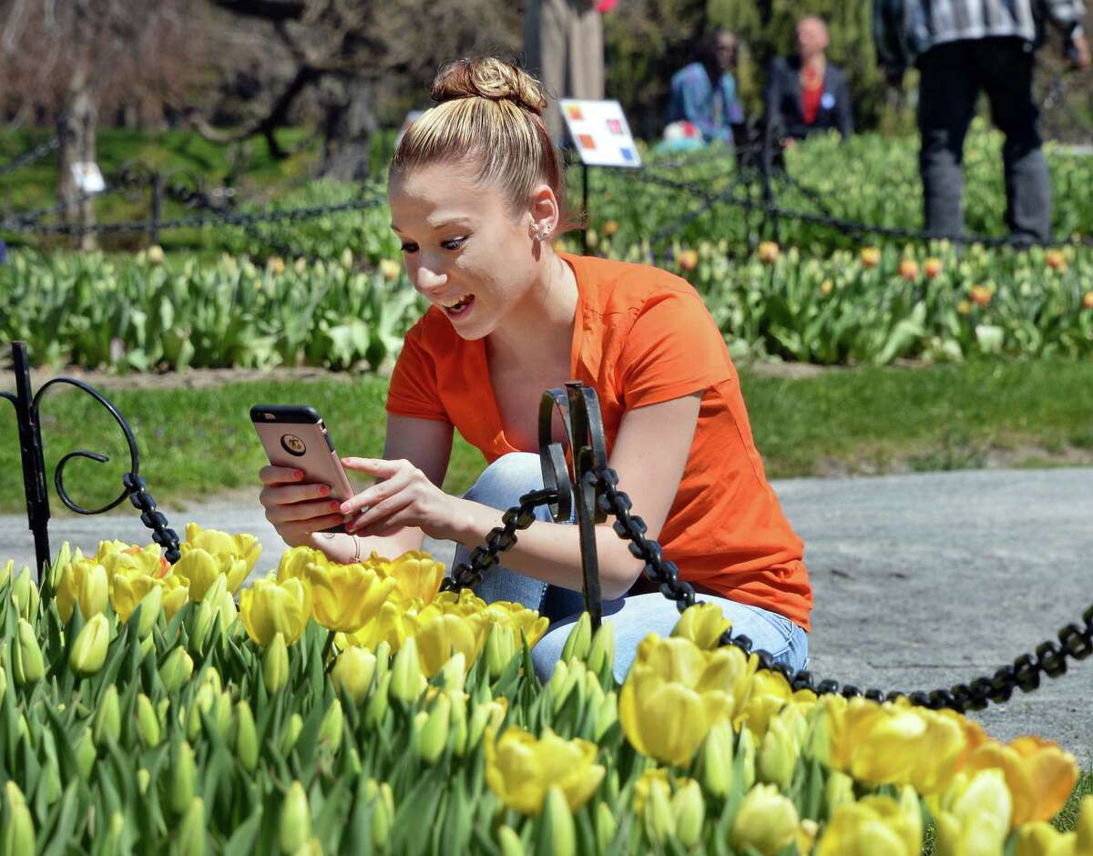 Amber Clark of Kinderhook uses her smartphone to photograph tulips at Washington Park Wednesday April 20, 2016 in Albany, NY. (John Carl D'Annibale / Times Union)