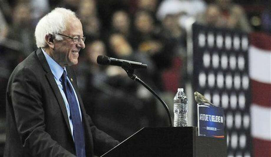 Democratic presidential candidate Sen. Bernie Sanders, I-Vt., smiles as a bird lands on his podium as he speaks during a rally at the Moda Center in Portland, Ore., Friday, March 25, 2016. (AP Photo/Steve Dykes) Photo: Steve Dykes