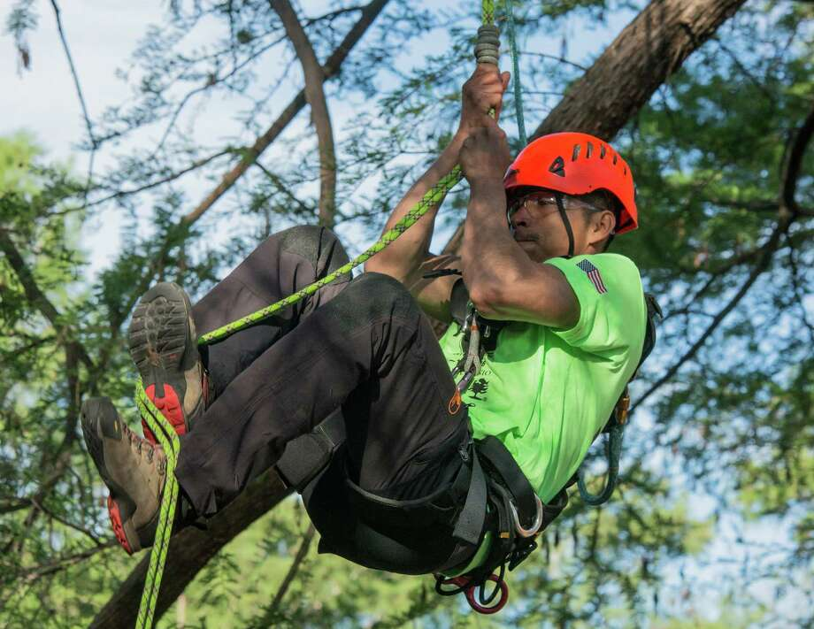 Miguel Pastenes of Dallas climbs during the footlock competition in the International Tree Climbing Championships in Brackenridge Park on April 2, 2016. Pastenes, the North American champion, finished second in the event. Photo: Joshua Trudell /For The Express-News