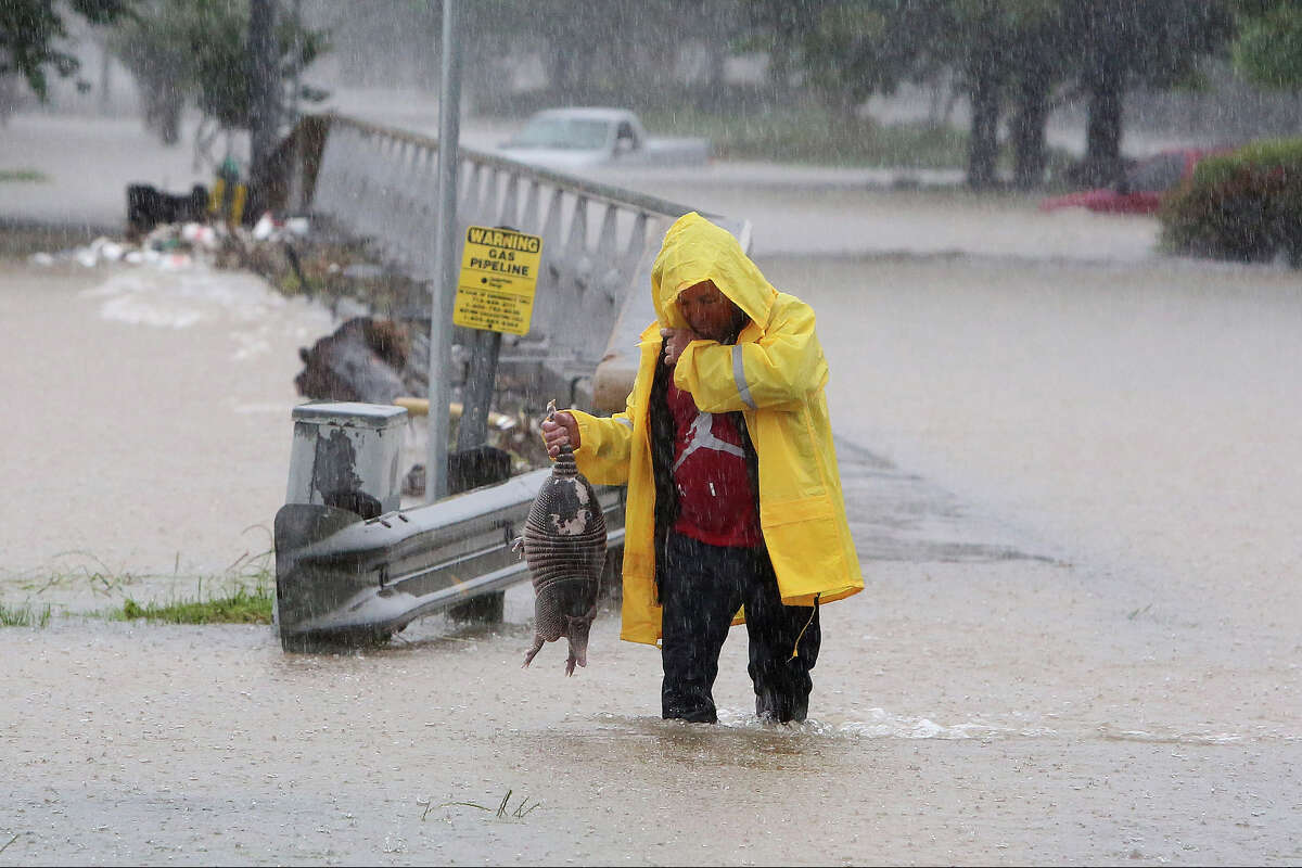 Rain continued to roll over the region throughout the morning. A man rescues an armadillo from high water near Greens Bayou and Greens Rd. Monday, April 18, 2016, in Houston.