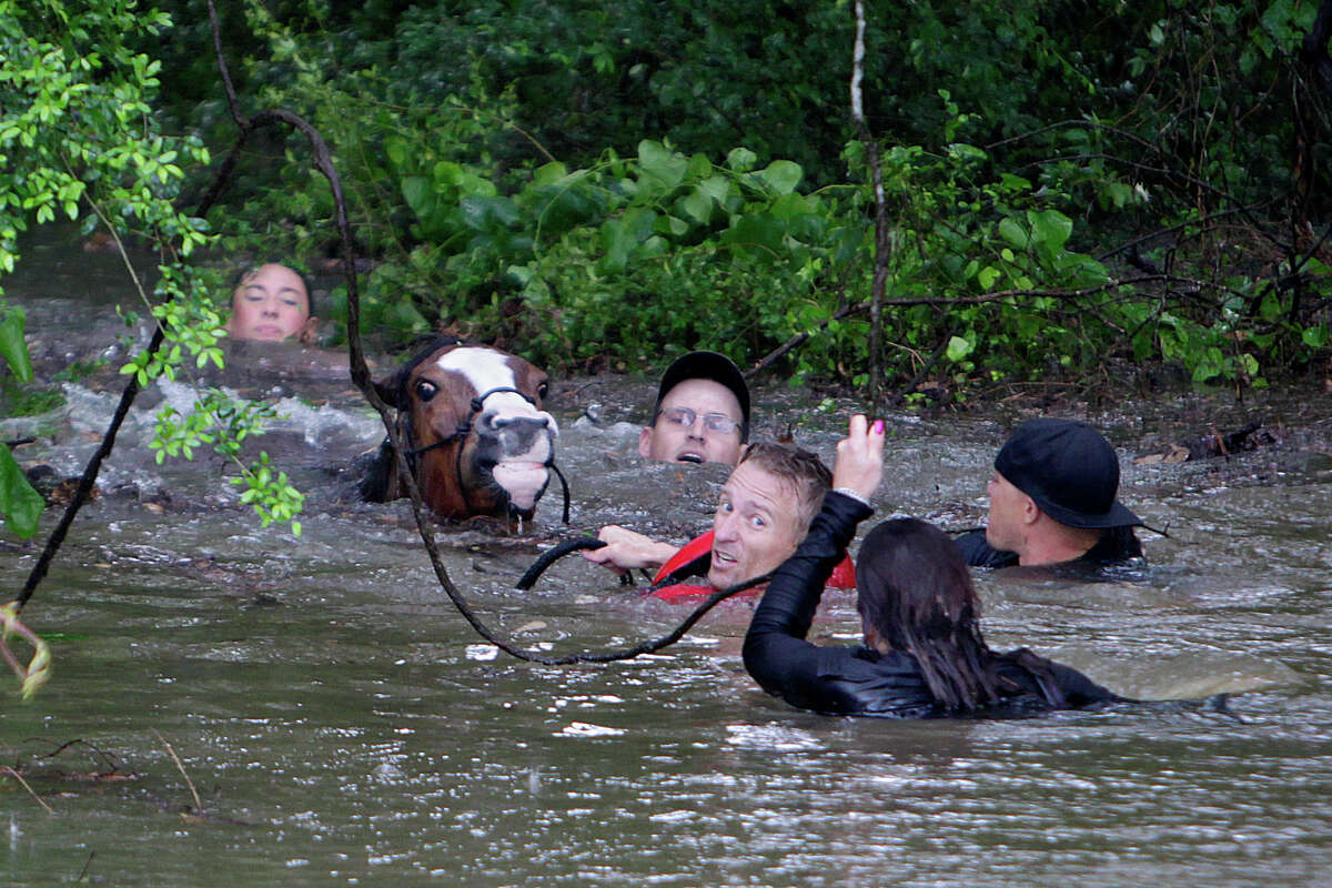 Meanwhile back in north Harris County a flooded Cypress Creek began to cause trouble for animals, people and houses alike. Locals work to rescue up to 70 horses along Cypresswood Drive near Humble along Cypress Creek, Monday, April 18, 2016, in Houston.