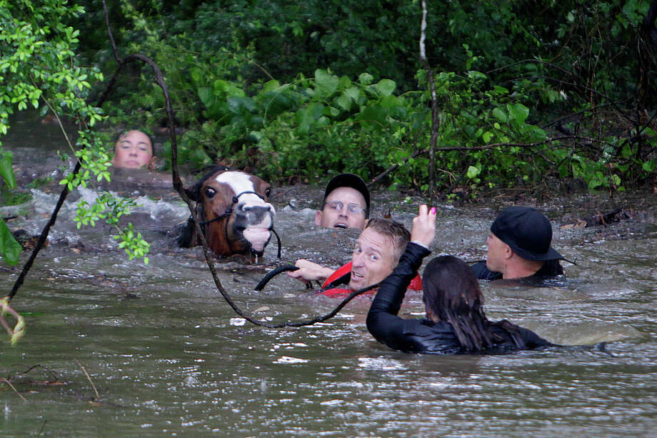 Meanwhile back in north Harris County a flooded Cypress Creek began to cause trouble for animals, people and houses alike.