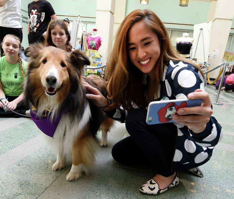 "Lyla Suwannapivek, 23 from Thailand and an international student gets a selfie with Sheltie ""Dune"" a trained therapy dog which was visiting students at the University at Albany to help reduce stress as they head in to the final weeks of the semester  Thursday April 21, 2016 in Albany, N.Y. This was part of the Stress Less program put on at the Science Library at the University.   (Skip Dickstein/Times Union) Photo: SKIP DICKSTEIN / 10036248A"