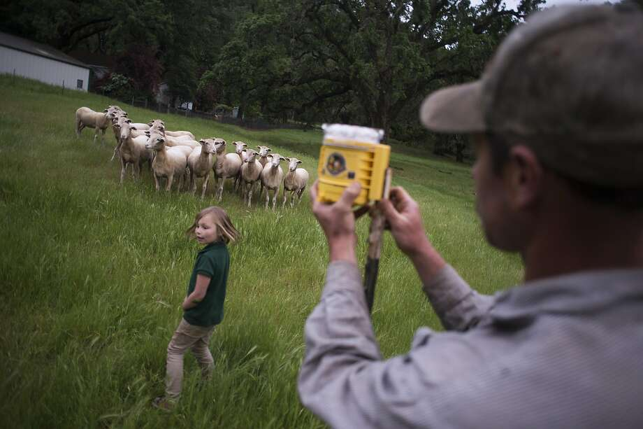Troy Mcwilliams, with daughter Mikayala McWilliams, 10, tends to a non-lethal predator deterrent at the Hopland Research & Extension Center in Hopland, CA, which does research on non-lethal predator management on April 21, 2016. Mcwilliams is a 3rd generation worker on the property who has been working there for 15 years and lives on the property with his wife and 3 children. Photo: Brian L. Frank, Special To The Chronicle