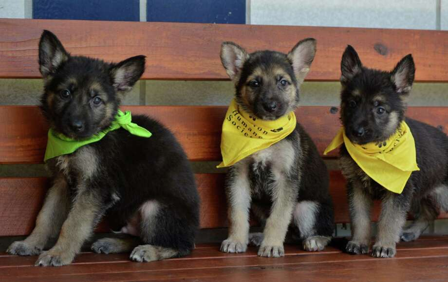 German ShepherdCommon Nicknames: Alsatian, Alsatian Wolfdog, Berger Allemand, Deutscher Schäferhund, GSD, Schäferhund