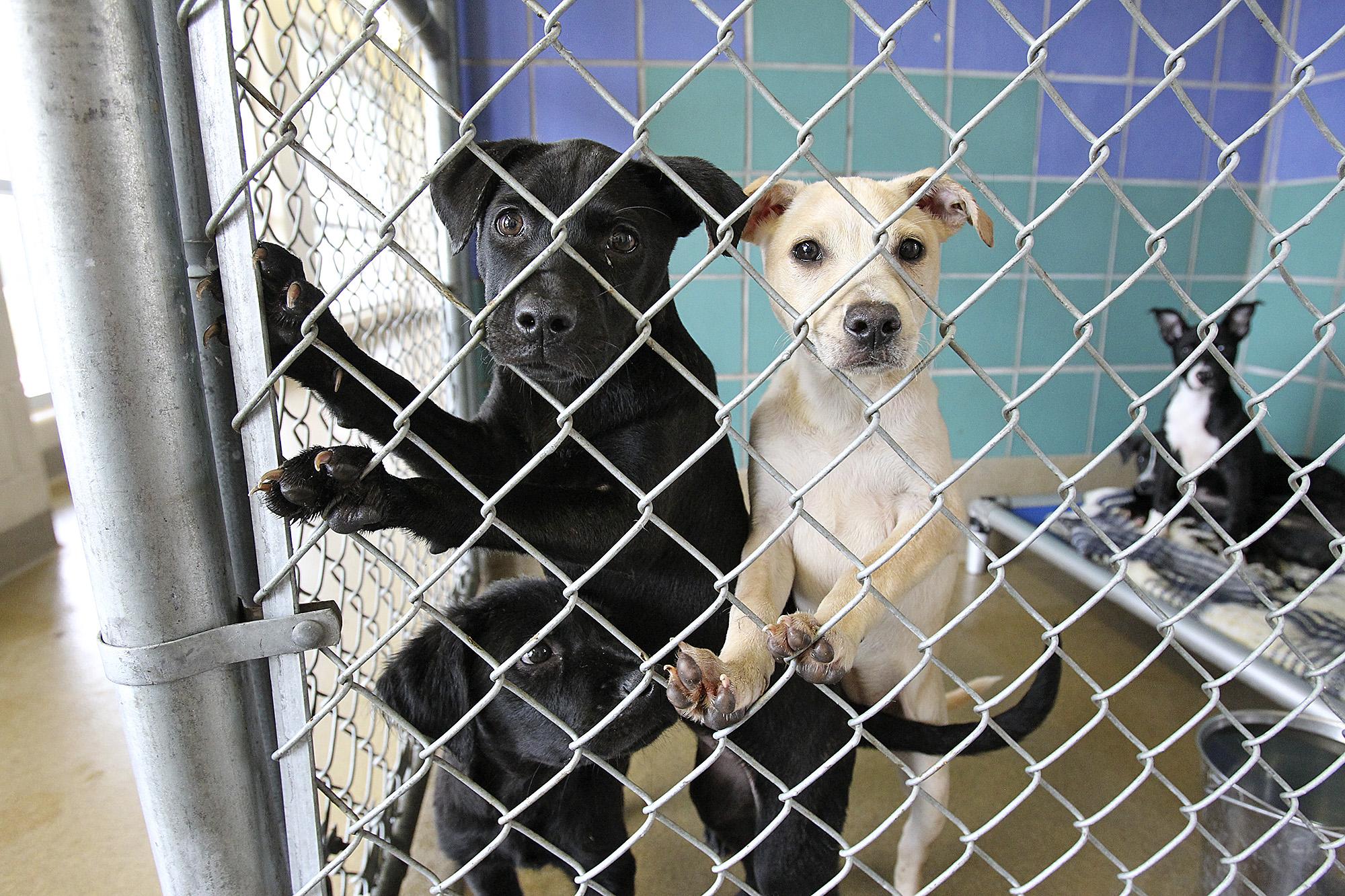 San Antonio Pets Alive saves thousands of animals - San