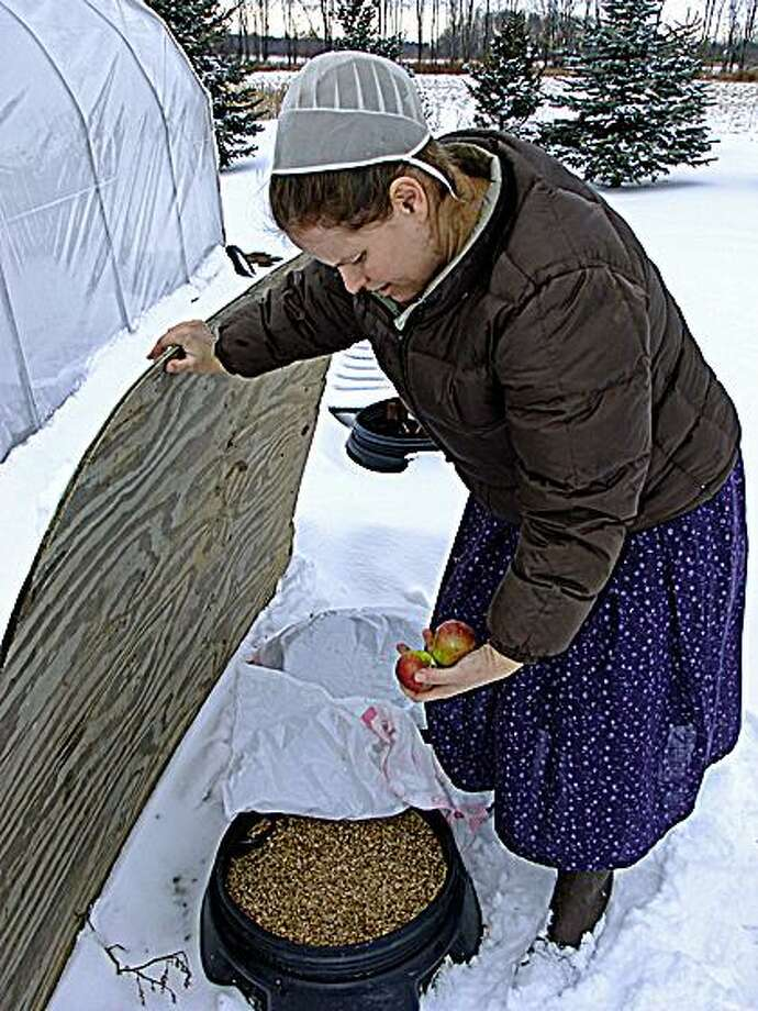 Sharon Morgan, of Willowbrook Farm, retrieves apples.