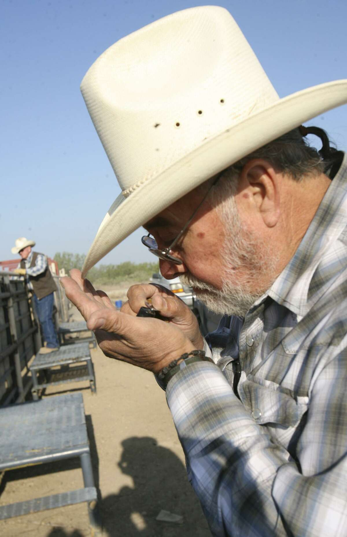 A tick inspector inspects a tick that was plucked off the steer at the Guerra Ranch in South Texas. Cattle fever tick carry a disease causes infected cattle to suffer bloody urine, diarrhea, fever and extreme anemia before dying. The disease once devastated U.S. cattle herds, wiping out 90 percent of cattle as far east as Pennsylvania and west as California.
