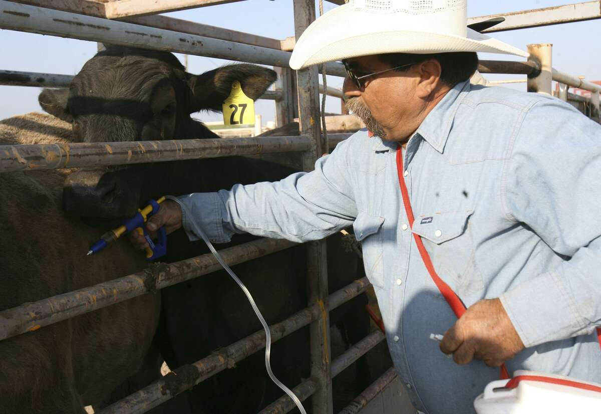 A USDA tick inspector on the watch for cattle fever ticks, which can cross the border from Mexico and have been spreading into the Texas interior. The president's budget proposal could lead to steep cuts in funding for the agency's animal plant and health inspection service.