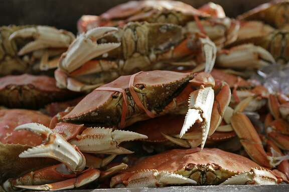 Imported Dungeness crabs are displayed for sale at Fisherman's Wharf, Thursday, Nov. 5, 2015, in San Francisco. Wildlife authorities delayed the local Dungeness crab season and closed the rock crab fishery for most of California on Thursday, just days after warning of dangerous levels of a neurotoxin linked to a massive algae bloom off the coast. (AP Photo/Eric Risberg)