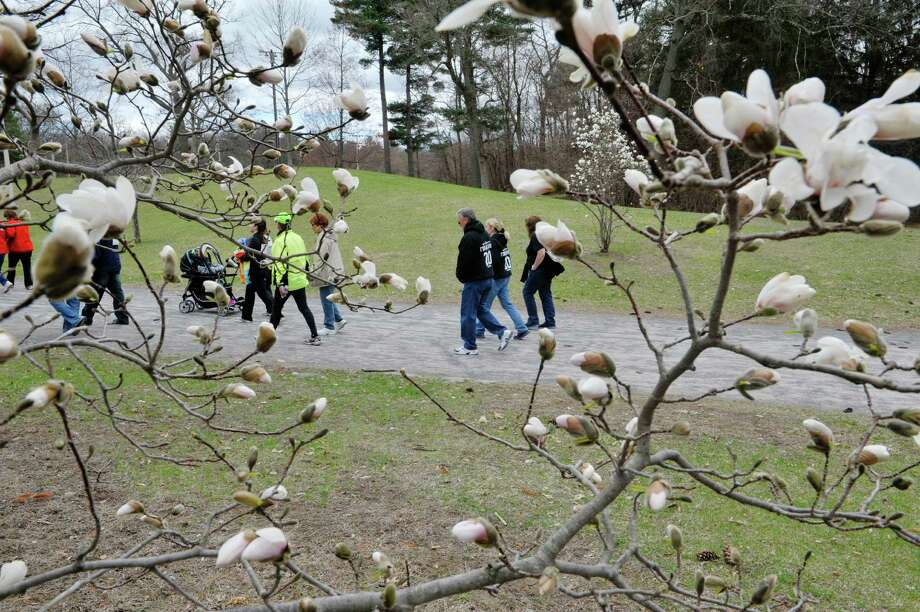 Participants in the 2K walk make their way through Central Park at the The 23rd annual Cherry Blossom Festival, put on by the Congregation Gates of Heaven on Sunday, April 26, 2015, in Schenectady, N.Y.  The money raised through the 5K race and the 2K walk benefit the St. Peters Regional ALS Center.    (Paul Buckowski / Times Union) Photo: PAUL BUCKOWSKI / 00031352A