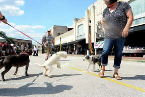 Dogs mingle as their owners take in the 3rd Annual OrleansOnOrleans, hosted by The Music Studio Saturday on Orleans Street in downtown Beaumont. The event brought together music, food, art and local vendors for a taste of New Orleans street festivities. Nearby, Ad Hoc Beaumont offered a day-long showing of artist Jason M. Miller's Glitch Landscapes & Ambient Soundscapes inside Copa. Photo taken Saturday, April 23, 2016 Kim Brent/The Enterprise