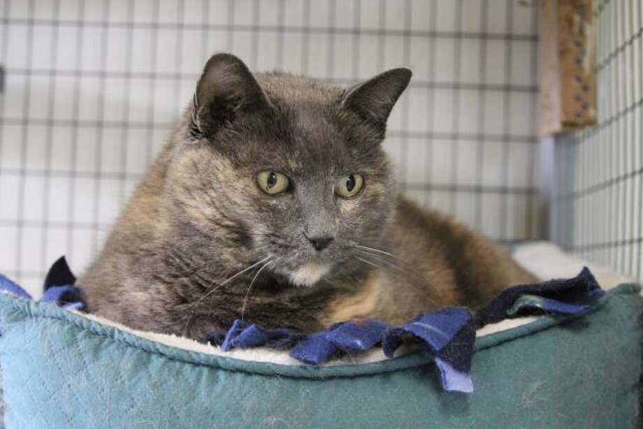 Emme is an affectionate and quiet girl. (Mary Lou Baker)