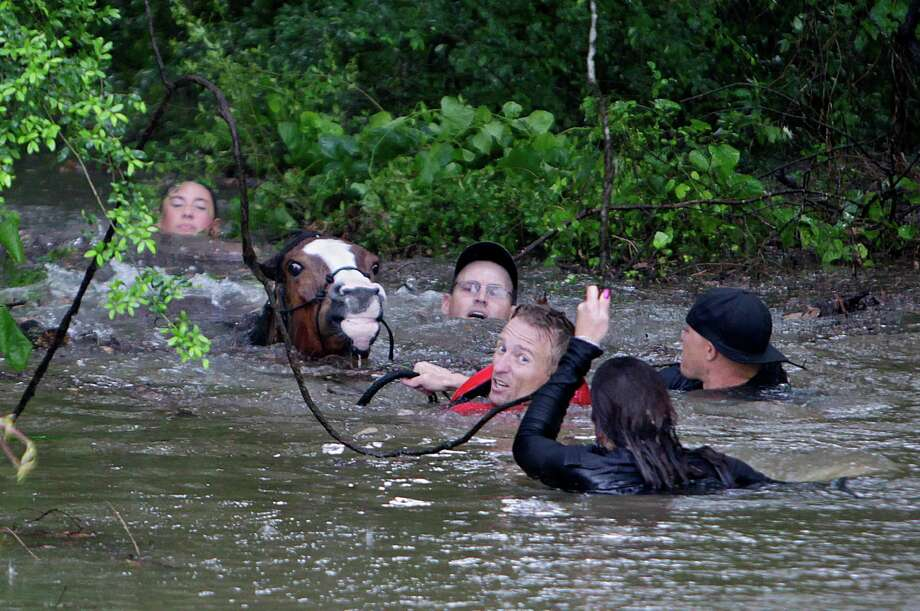 Justin Nelzen, 39, a veteran who served in Afghanistan, reconnects with Montego, a horse he helped save during last Monday's flood. Nelzen, below in red vest, rescued 11 horses from Cypress Creek with the help of other volunteers along with the 10 to 15 animals he saved on his own. Photo: Mark Mulligan, MBI / Houston Chronicle