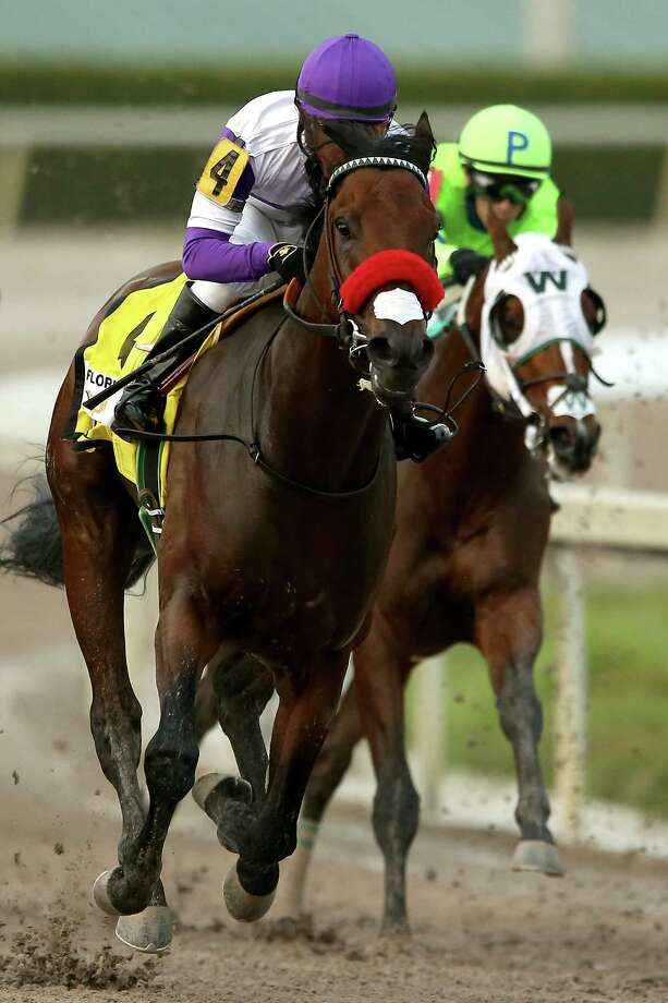 HALLANDALE, FL - APRIL 02:  Nyquist #4, riden by Mario Gutuerrez, comes out of turn four during the 2016 Florida Derby at Gulfstream Park April 2, 2016 in Hallandale, Florida.  (Photo by Matthew Stockman/Getty Images) ORG XMIT: 625515071 Photo: Matthew Stockman / 2016 Getty Images