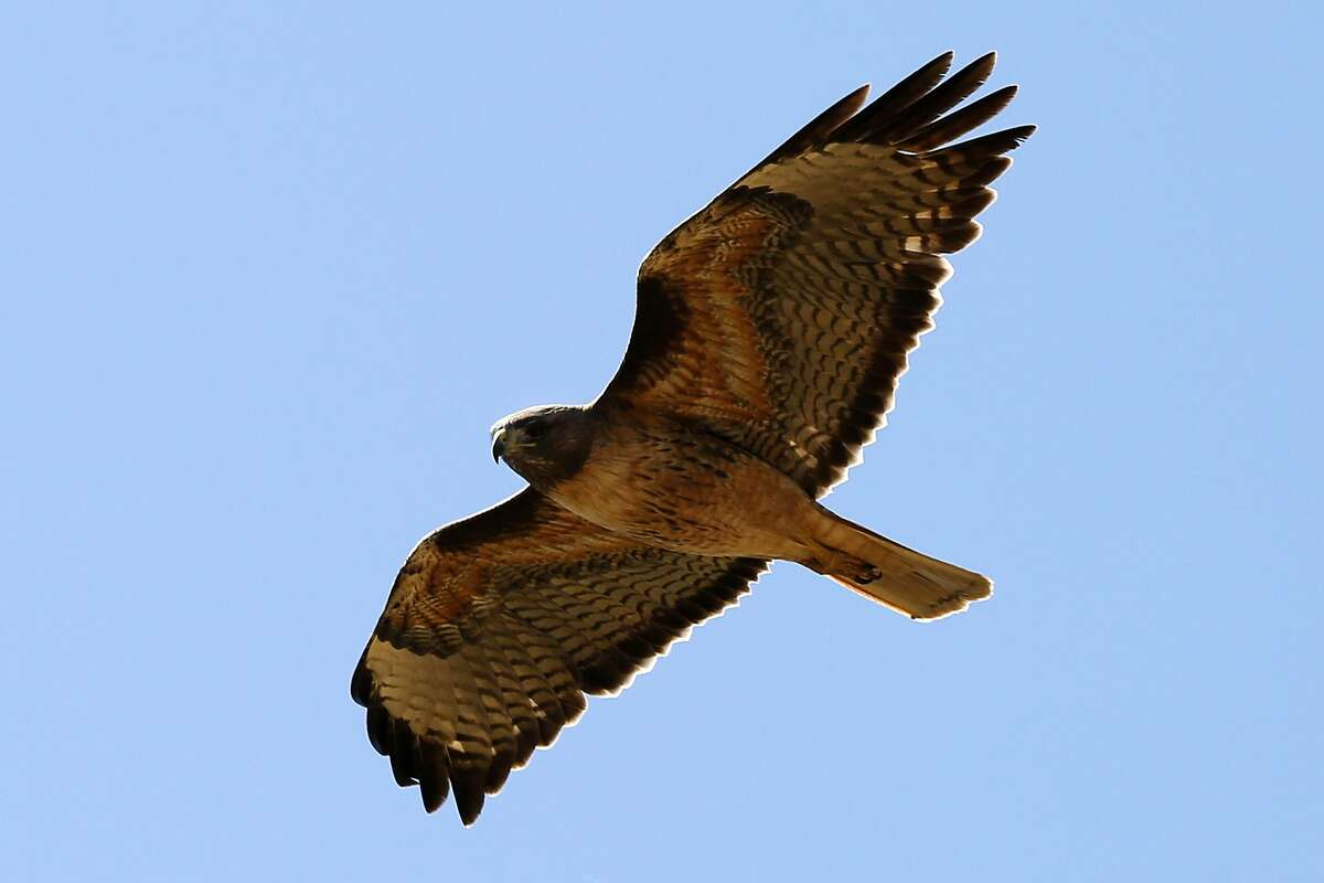 Earthplace Nature Discovery Center in Westport is holding an event on Friday to talk about birds of prey that are at the center. You will also be able to make smores on a campfire. Find out more.
