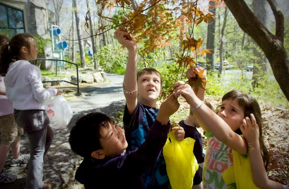 "Lucas Park, 4, Shane McCaghey, 9, and Lara Vivone, 8, pick Japanese Maple leaves as naturalist Steve Brill conducts a ""Wild Edibles"" hike during Take a Hike week at the Stamford Museum and Nature Center in Stamford, Conn. on Thursday April 15, 2010. Photo: Kathleen O'Rourke / Stamford Advocate"
