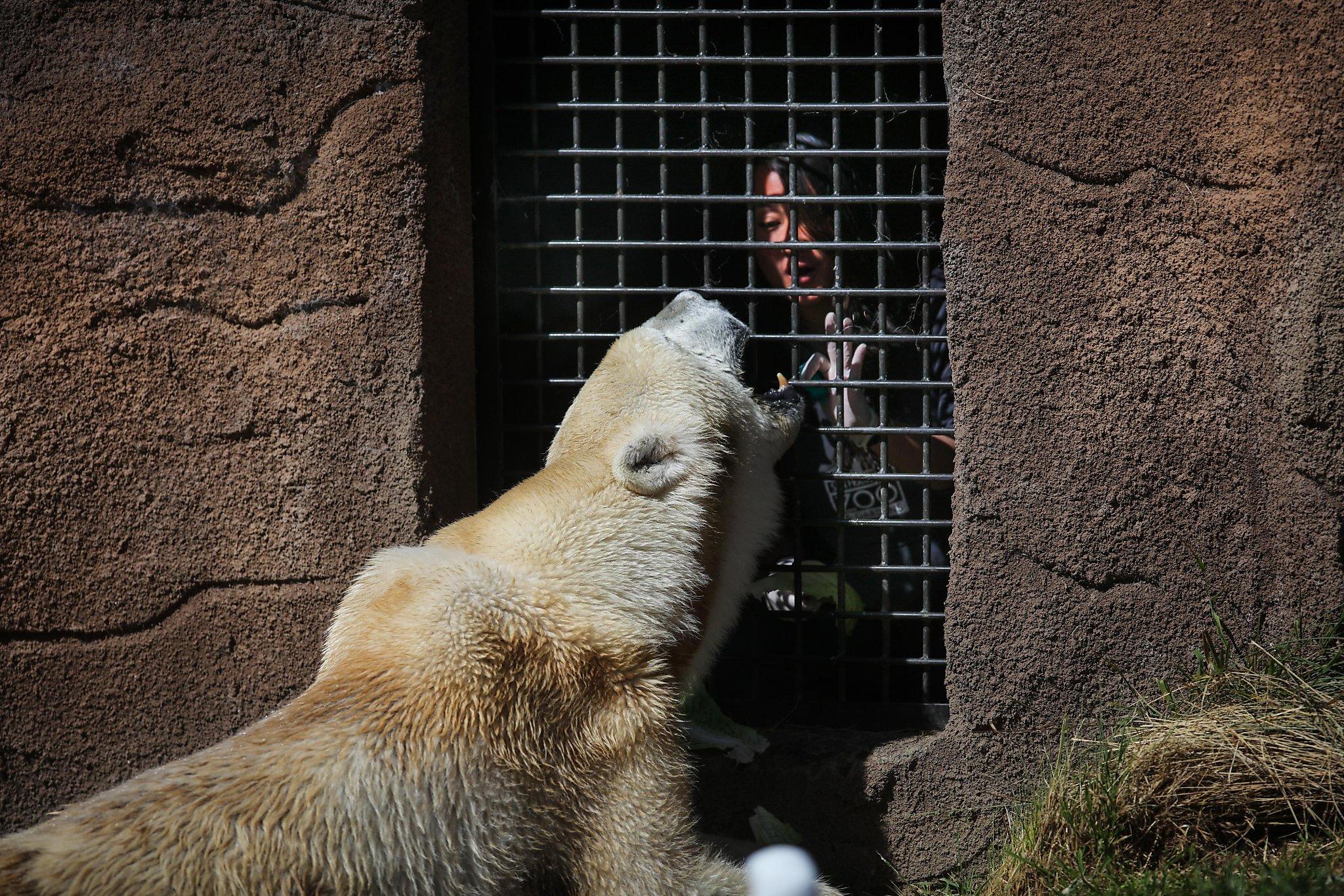 Furry bears raw