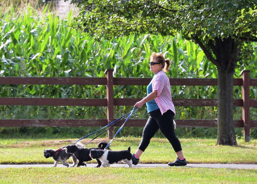 Linda Hotaling of Watervliet walks her three Shih Tzu dogs, Sadie, Chewie and Summer at the Crossings Friday morning Sept. 25, 2015 in Colonie, NY. (John Carl D'Annibale / Times Union)