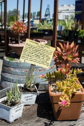 Plants sit on display at Ploughshares Nursery in Alameda, Calif., on Sunday, April 17, 2016. The nursery is a social enterprise of the Alameda Point Collaborative supportive housing community and all sales support formerly homeless families.