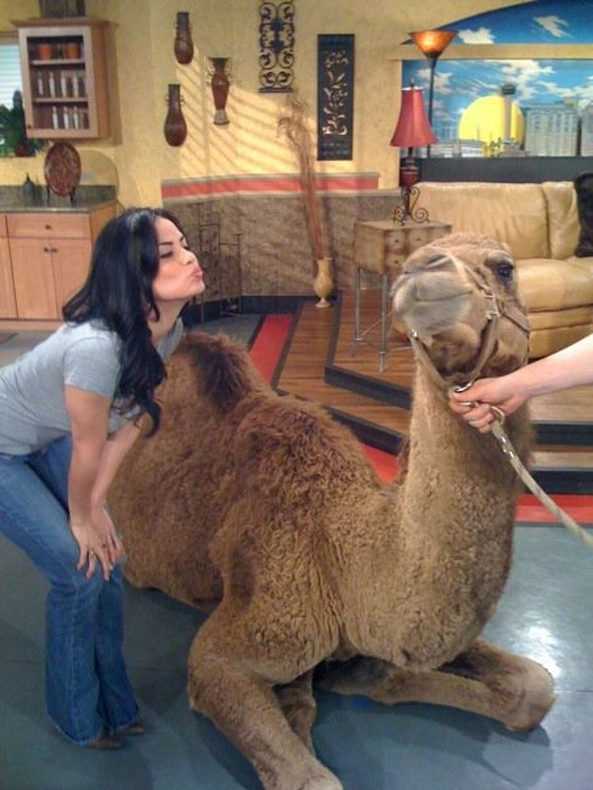 San Antonio TV host Cassandra Lazenby handled all sorts of animal visits to 'Great Day, SA' when she worked as executive producer on the KENS show - from a huge snake to a camel.