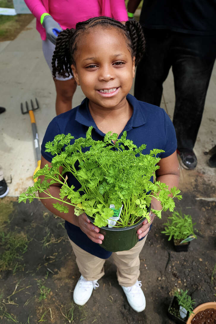First-grader Amira Fox gets ready to plant an herb in the new garden at Ketcham Elementary School.