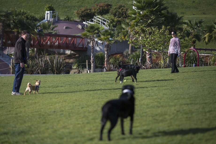People play ball with their dogs at Dolores Park on Friday, April 29, 2016 in San Francisco, Calif. Prop B would provide $3 million a year for parks from the city's general fund. Photo: Santiago Mejia, Special To The Chronicle