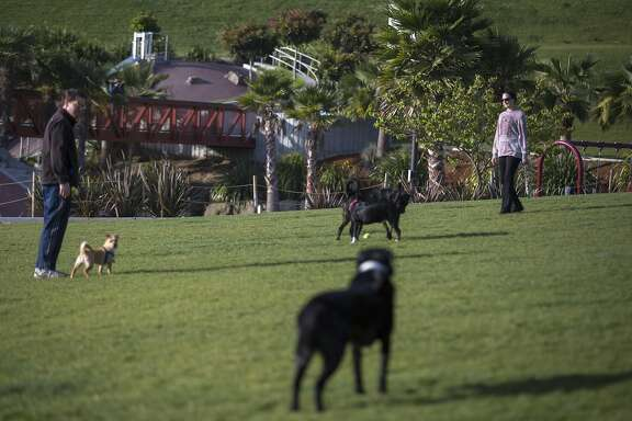 People play ball with their dogs at Dolores Park on Friday, April 29, 2016 in San Francisco, Calif. Prop B would provide $3 million a year for parks from the city's general fund.