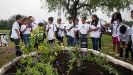 Mrs Apolinar's fourth graders from Glenoaks Elementary School check out the native flower beds during UTSA Monarch Pledge Day Friday April 29, 2016 at the main campus. UTSA is dedicating nearly seven acres at its main campus for the research and preservation of the Monarch butterfly, the Texas state insect. Special guests included Mayor Ivy Taylor, Dr. Benjamin Tuggle, Regional Director of the U.S. Fish and Wildlife Service Southern Region, and Cheryl Jefferson, Partnership and Strategic Initiative Director of the U.S. Forest Service Southern Research Station.