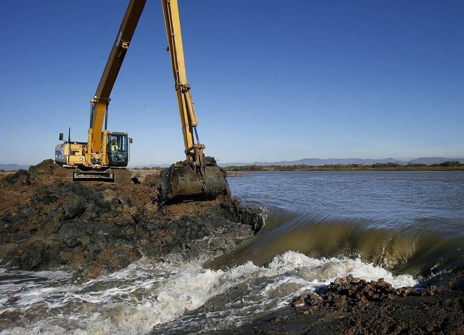 Water from the Dutchman Slough in Solano County begins to flow at Cullinan Ranch last year after tidal flow was introduced to a 1,500-acre wetland. Marshes offer crucial wildlife habitat. Photo: Brant Ward, The Chronicle