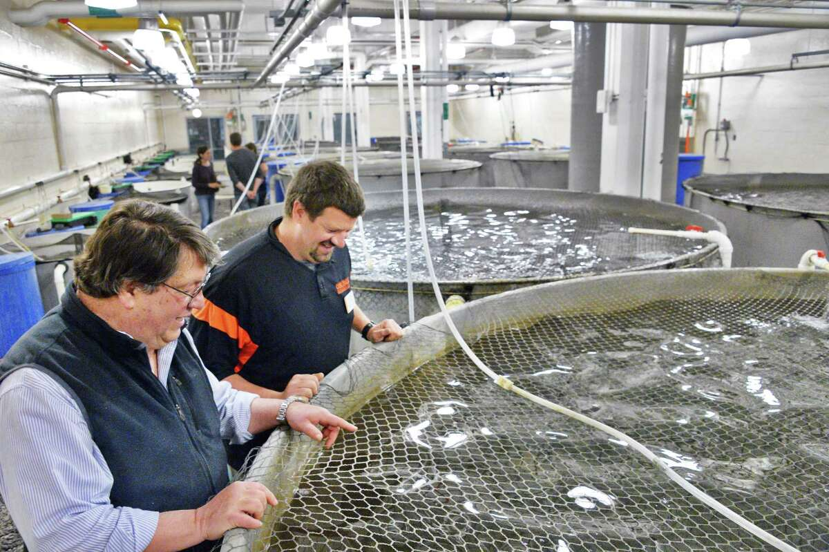 SUNY Cobleskill professor & chair of the Fisheries, Wildlife & Environmental Science Dept., John Foster, left, and fish hatchery manager Brent Lehman check on tanks of cross-bred Arctic char and brook trout in the school's cold water hatchery Wednesday April 27, 2016 in Cobleskill, NY. (John Carl D'Annibale / Times Union)