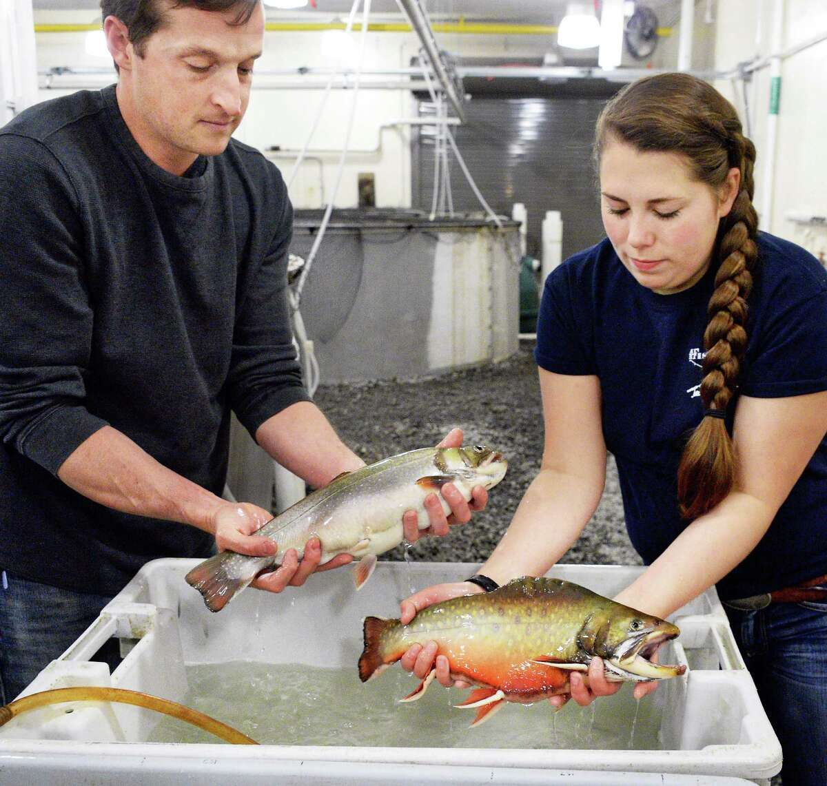 SUNY Cobleskill fisheries and aquaculture seniors Edward Perri, left, and Samantha Carey with cross-bred Arctic char and brook trout in the school's cold water hatchery Wednesday April 27, 2016 in Cobleskill, NY. (John Carl D'Annibale / Times Union)