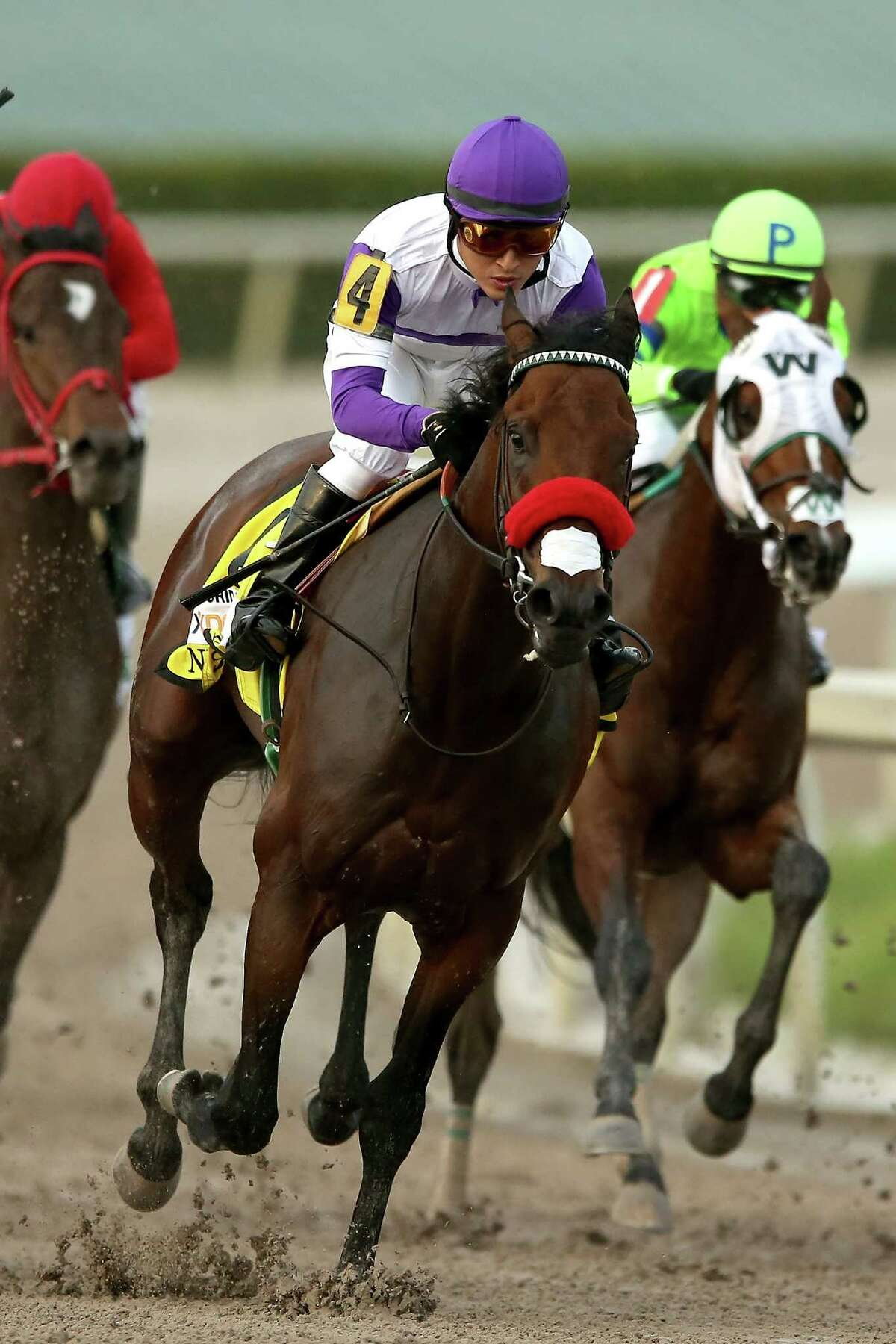 HALLANDALE, FL - APRIL 02: Nyquist #4, riden by Mario Gutuerrez, comes out of turn four during the 2016 Florida Derby at Gulfstream Park April 2, 2016 in Hallandale, Florida. (Photo by Matthew Stockman/Getty Images) ORG XMIT: 625515071