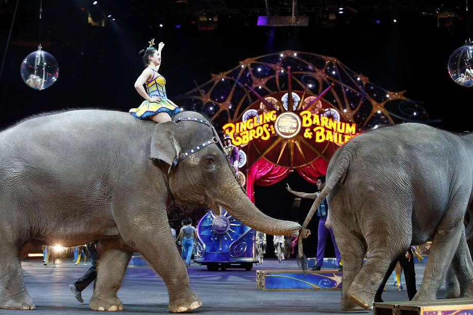 HOLD FOR STORY MOVING MAY 1 BY MICHELLE SMITH IN PROVIDENCE    ---   FILE - In this March 19, 2015 file photo, elephants walk during a performance of the Ringling Bros. and Barnum & Bailey Circus, in Washington. Ringling Bros. is scheduled to hold it's final elephant show during a performance Sunday night, May 1, 2016 in Providence, R.I. (AP Photo/Alex Brandon, File) Photo: Alex Brandon, Associated Press