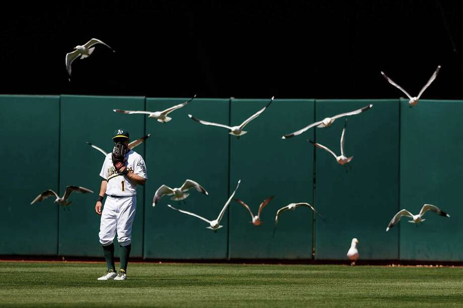 "It's not nearly as frightening as Northern California's most famous avian attack, but this version of ""The Birds"" starring Athletics center fielder Billy Burns and a flock of seagulls has to be a distraction. Photo: Jason O. Watson, Stringer / 2016 Getty Images"