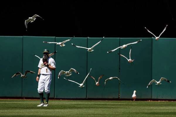 """It's not nearly as frightening as Northern California's most famous avian attack, but this version of """"The Birds"""" starring Athletics center fielder Billy Burns and a flock of seagulls has to be a distraction."""