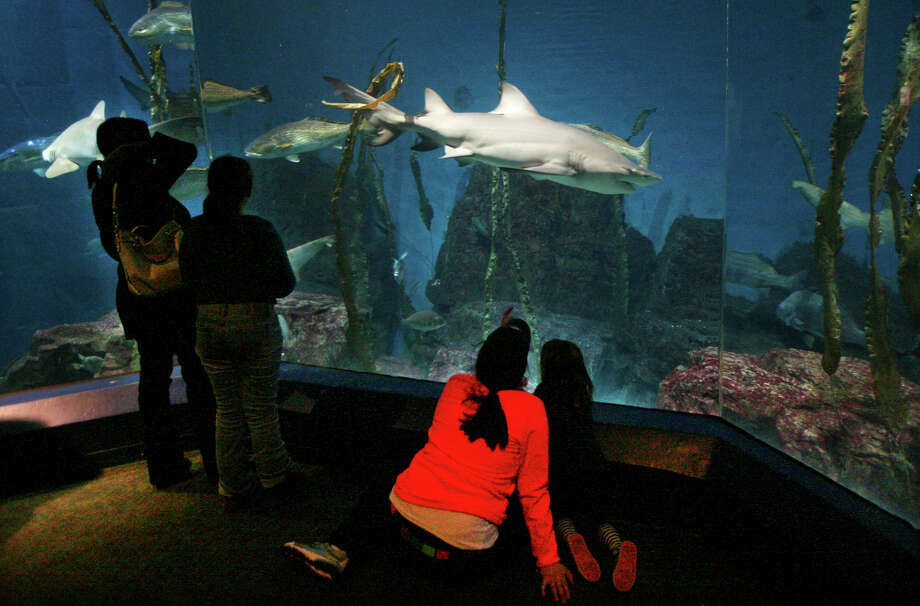 "The Maritime Aquarium in Norwalk, Conn. was named ""best family attraction"" in Connecticut in the May-June 2016 edition of Yankee Magazine. Photo: Brian A. Pounds / Brian A. Pounds / Connecticut Post"