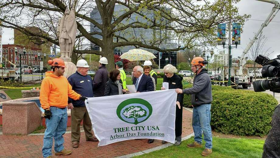 The Stamford Tree Foundation, in partnership with the city, Bartlett Tree Experts, The Care of Trees, Ben Sykas and Eastern Land Management, provided structural pruning to the trees in Columbus Park in celebration of Arbor Day. Photo: /