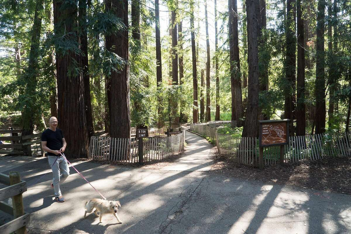 A man walks through Redwood Grove Nature Preserve in Los Altos, Calif. on Saturday, April 30, 2016. Downtown Los Altos offers visitors boutique shops and bakeries.